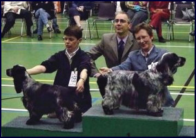 Dutch Spaniel Club 2004